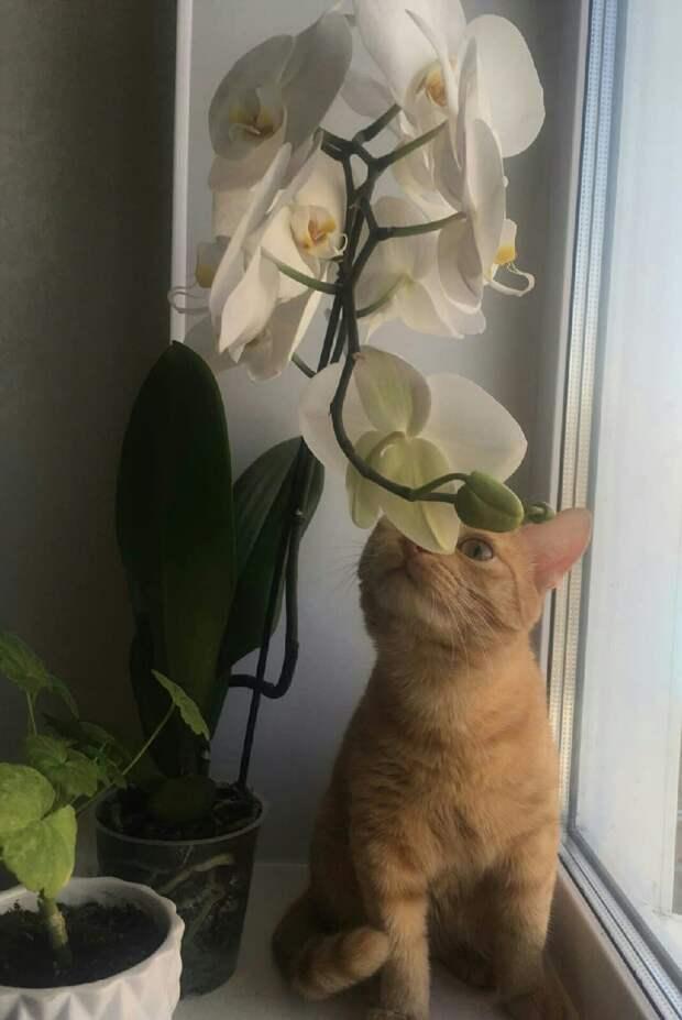 кот и орхидея