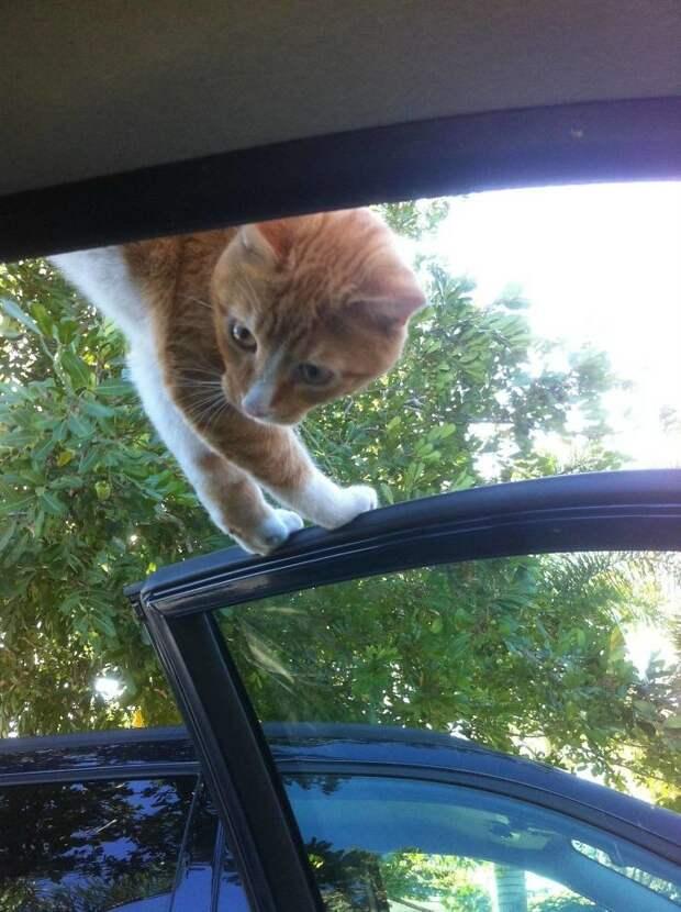 Нестандартный способ знакомства встреча, гости, дружба, животные, коты, кошки, неожиданно, фото