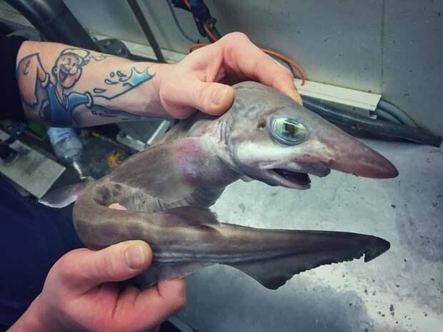 Это , вроде, акула ? монстры, море, рыбалка, рыбы, улов