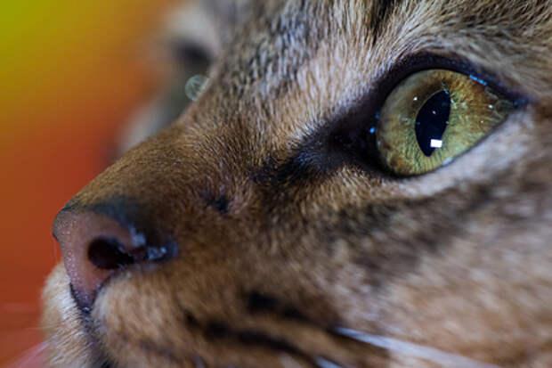 Две британки поссорились из-за дружелюбного кота