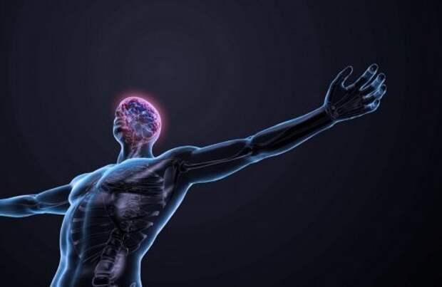 2. Наши нервные импульсы перемещаются со скоростью в 402 километра в час тело, человек, шокирующие факты