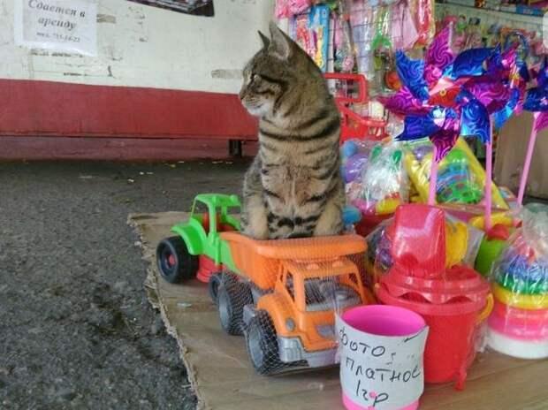 7 самых знаменитых котов-барыг