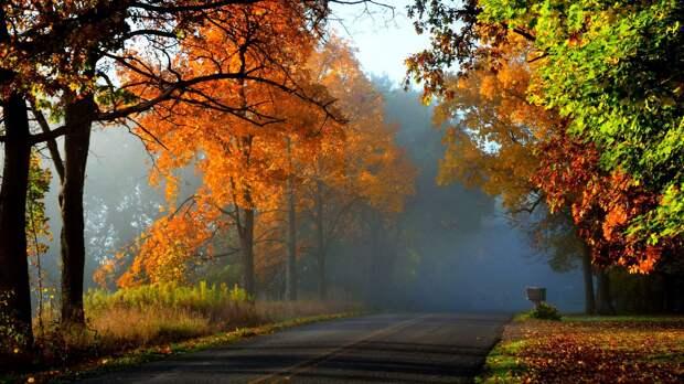 Настолько раскидиста осень... ( И. Лиснянская)