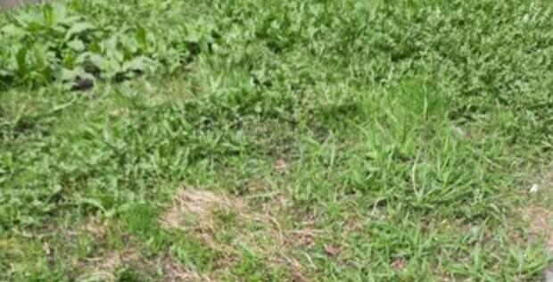Возле дома на Новочеркасском очистили дворовую территорию