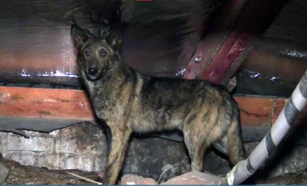 Запертая на петербургском чердаке собака пять дней ждала помощи