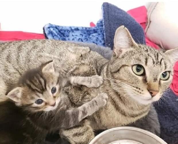 Кошка возле котенка