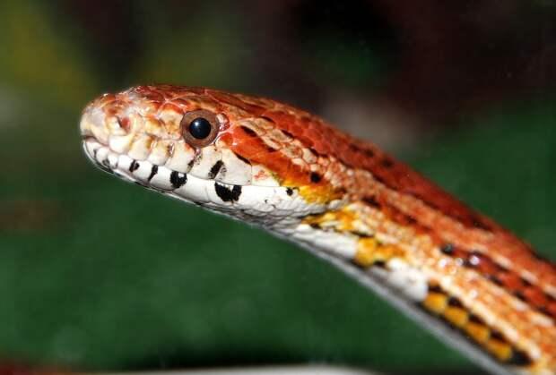 Змея в туалете: жительница Тулы увидела живую рептилию в унитазе