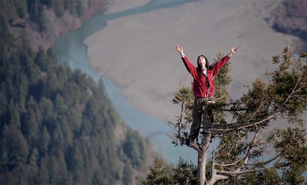 Девушка забралась на гигантское дерево и не слезала с него два года