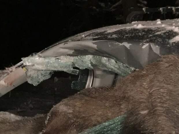 В Норвегии лось влетел в салон автомобиля авария, авто, авто авария, дтп, лось, лося сбили, норвегия, повезло