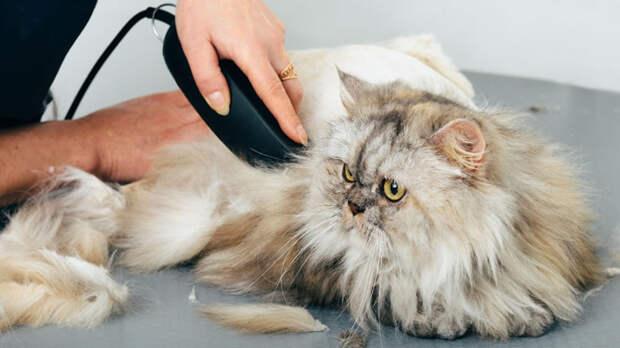 Подстричь кошку можно самостоятельно