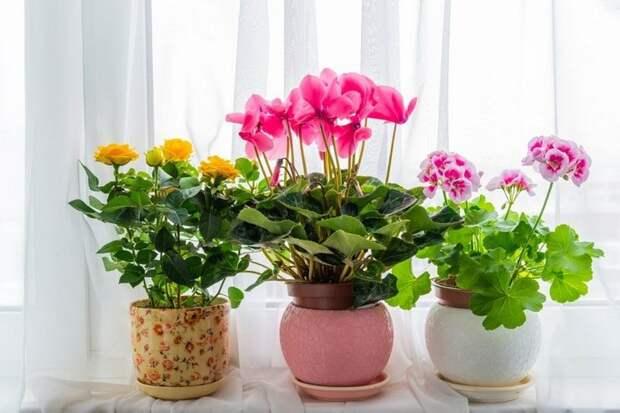 Весной меняется частота, объемы и время поливов
