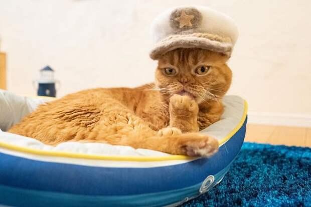 У мужа с женой трое котов, которые сильно линяют. Супруги сделали из шерсти питомцев шляпки, и это было их лучшей идеей