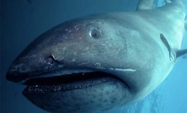 19 миллионов лет назад 90% акул неожиданно исчезли: ученые пытаются понять причины