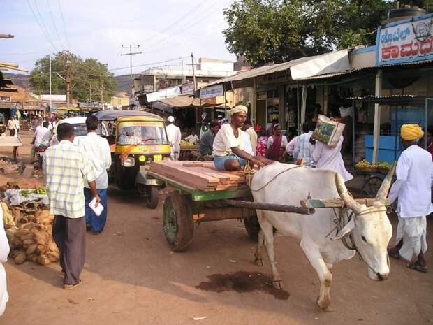 Более 40,8 тыс. случаев «черного грибка» выявили в Индии