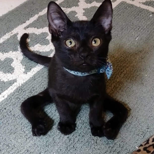 Знакомься, Эрис — единственный в своем роде кот-паук, который не оставит вас равнодушным
