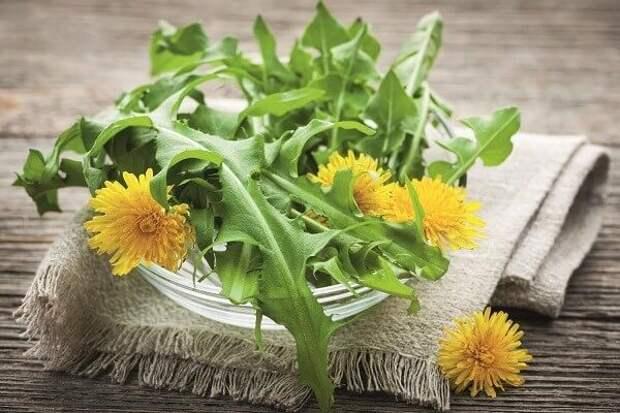 Это растение помогает бороться с дерматитом и экземой