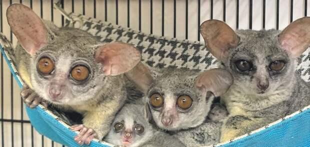 Обычную квартиру в Северном Медведкове обживают экзотические обезьяны