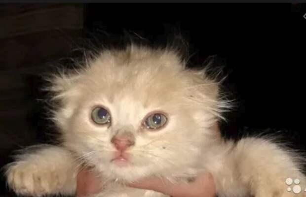 Эту историю рассказала мне девушка, которая носит на шее кулон в виде кошки