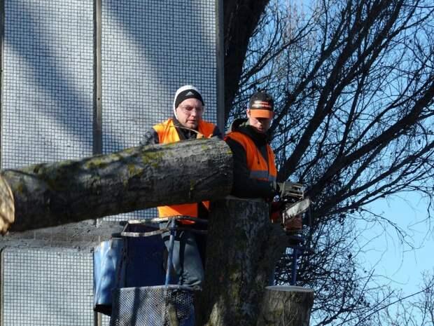 На Хорошевском шоссе удалили аварийное дерево
