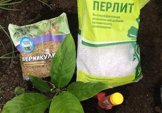 Какие вкусняшки для цветов лучше: Перлит или вермикулит?