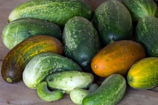 Все грядки будут без огурцов: частая ошибка дачников, которая губит весь урожай