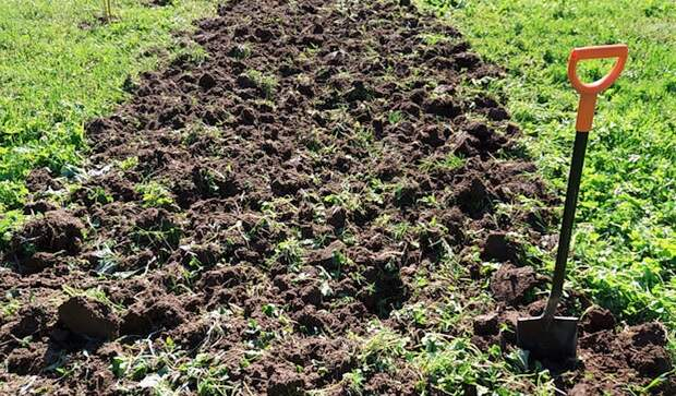 Когда копать огород: осенью или весной?