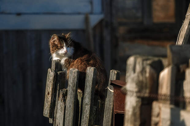 Обычная деревенская жизнь.