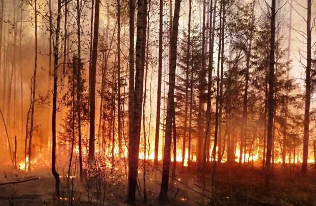 Сотрудники МЧС спасли 350 туристов из района лесного пожара под Анапой