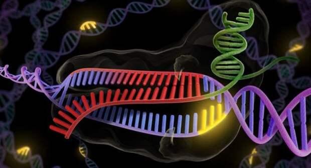 Редактирование генов (CRISPR) будущее, в мире, животные, интересное, люди, наука, эксперимент