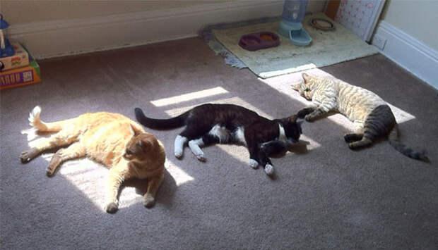 Сеанс солнцетерапии животные, котики, лучи, погреться, солнечные ванны, солнце, температура, тепло