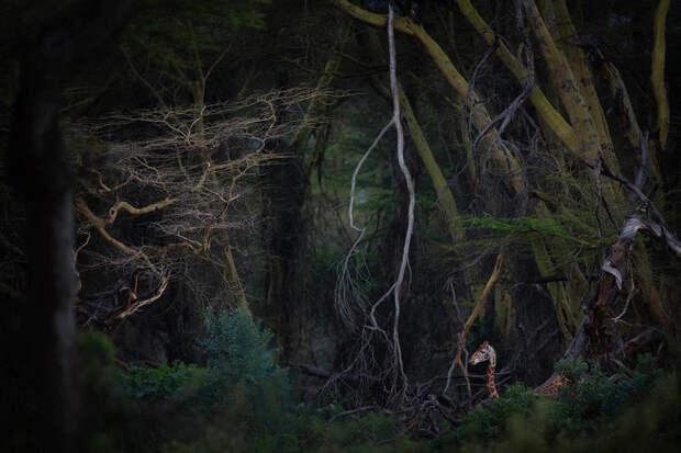 10 лучших фотографий сконкурса Nature Photographer 2020