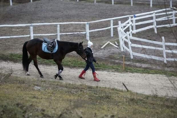 Сириец приехал в Ростов-на Дону верхом на коне и хочет подарить его Путину