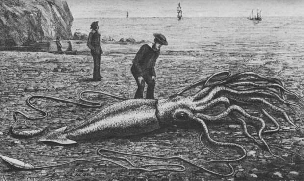 Глаза диаметром 27 сантиметров: как выглядят самые большие моллюски на планете