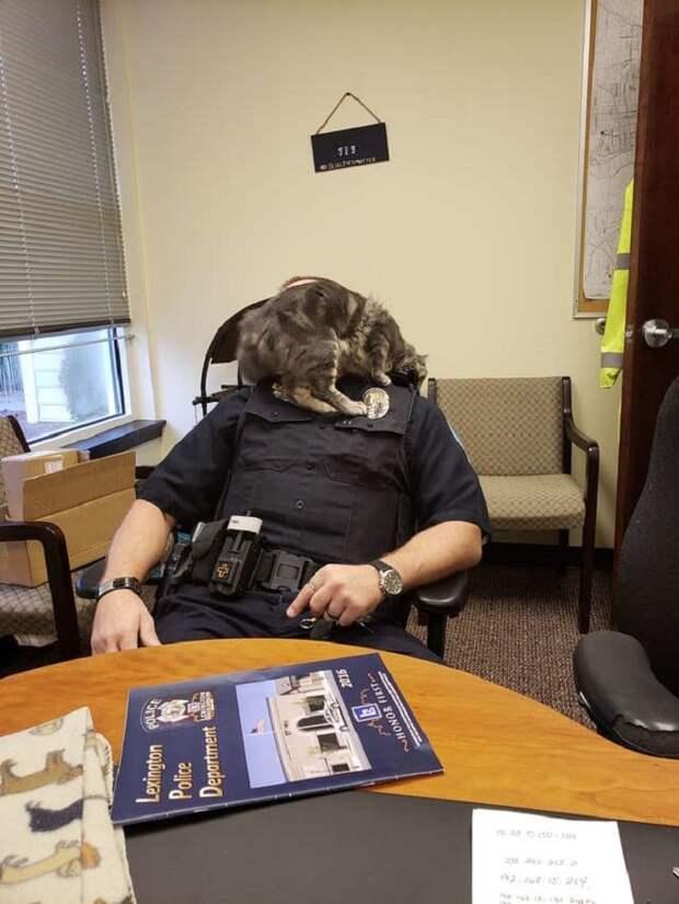 Кошка и офицер
