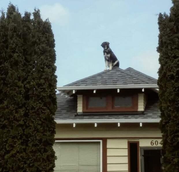 собака сидит на крыше дома