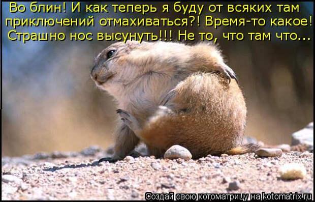 kotomatritsa_Fw (594x381, 226Kb)