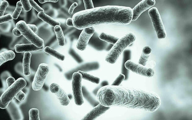 Как сделать дороги на века - просто добавить бактерии!