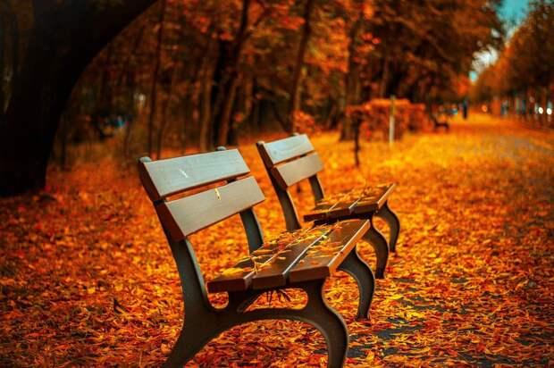 Гидрометцентр: в России с 22 сентября начнется «золотая осень»