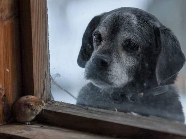 Собака и полевка жизнь, интересные, фото