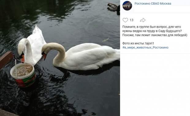 Фото дня: трапеза лебедей в Саду будущего