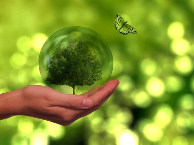 На Васильевском острове пройдет «День эколога»