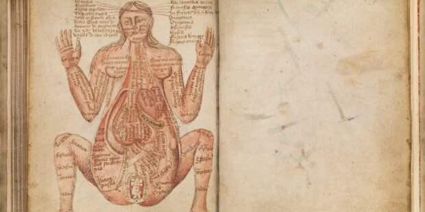 Устройство беременной женщины, Йоханнес де Кетам