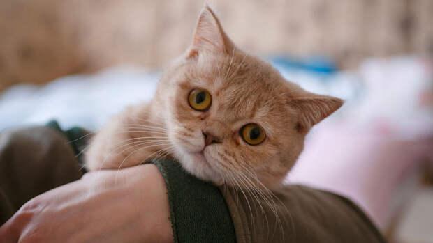 Приговор по делу о поставке наркотиков в колонию с помощью кота признали законным