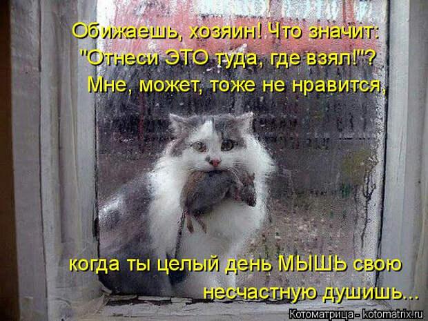 kotomatritsa_B6 (650x488, 307Kb)
