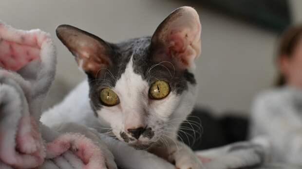 Зоологи составили топ-10 подарков для кошек и их владельцев