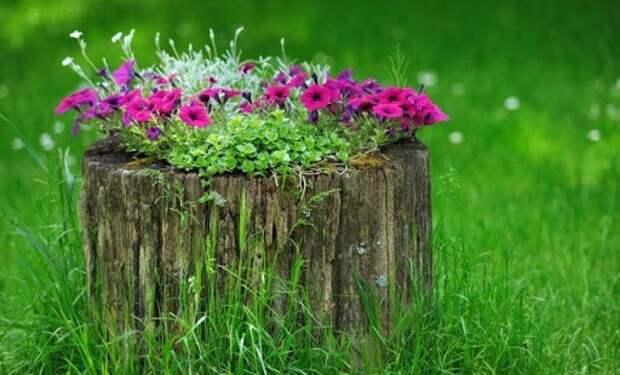 Пеньки цветочные дачные