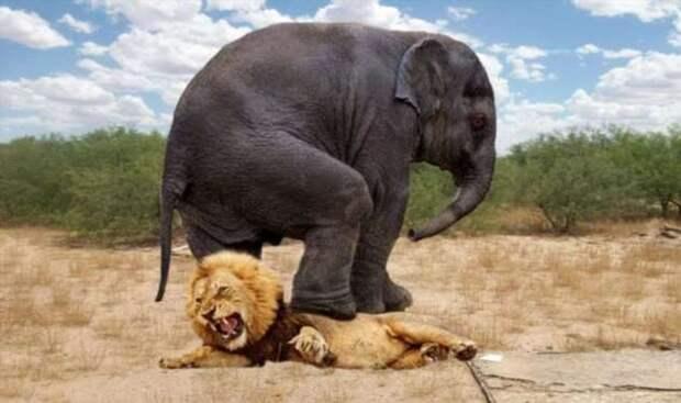 Загадка природы: почему животные перестают бояться хищников? (4 фото)