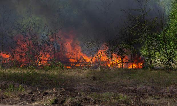 Ввыходные вАрхангельской области ликвидировали три лесных пожара