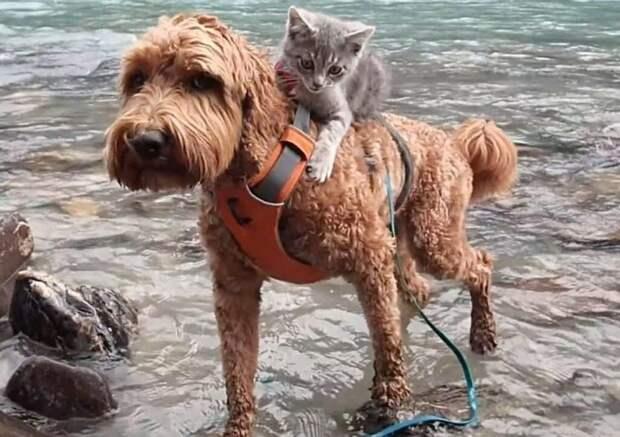 «Остановись!» — крикнула хозяйка, но пес уже понес на спине бездомного котенка