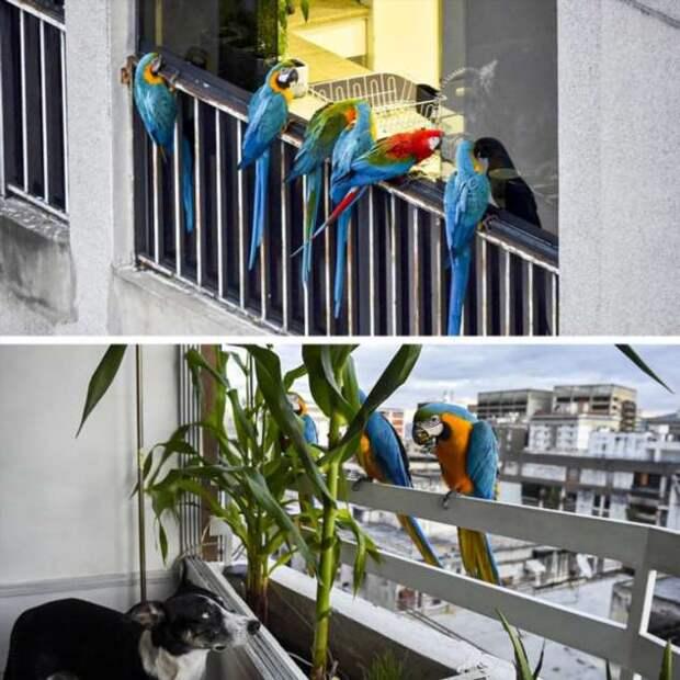 15 животных, которых можно встретить и покормить в разных странах мира, совсем как привычных нам голубей